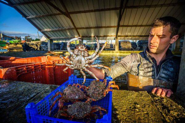 DSC00221 – Les huîtres de Mesquer Penbé