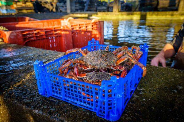 araignees – Les huîtres de Mesquer Penbé
