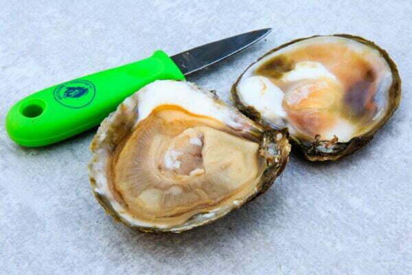 huîtres-plates-romain-fohanno-producteur-à-mesquer-penbé-(15)