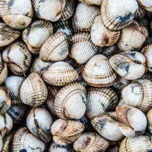 coques hd – Les huîtres de Mesquer Penbé