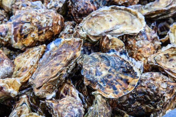 Des huîtres disponibles au distributeur automatique de Guérande