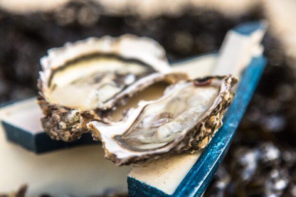 huitres de mesquer kercabellec scaled – Les huîtres de Mesquer Penbé
