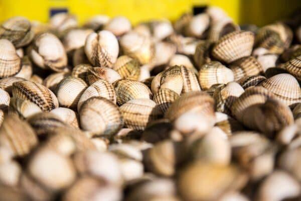 huitres de mesquer penbe bzh13 scaled – Les huîtres de Mesquer Penbé
