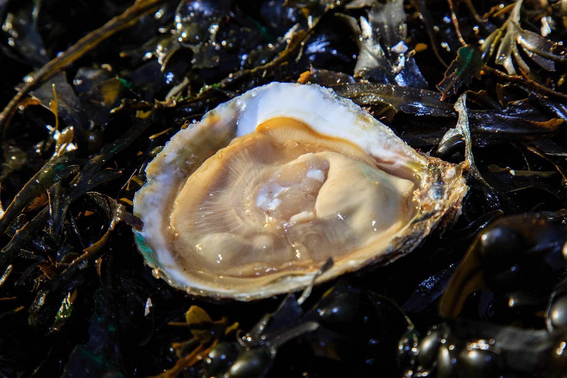 ouverture de la boutique d'huîtres en ligne
