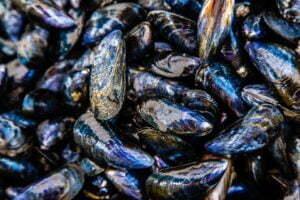 moules hd – Les huîtres de Mesquer Penbé
