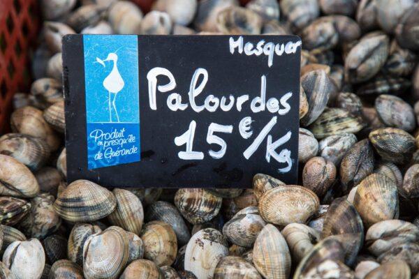 palourdes de mesquer producteur romain fohanno 15E – Les huîtres de Mesquer Penbé