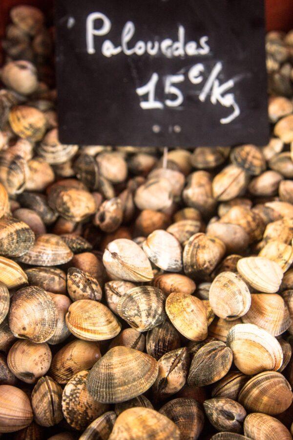 palourdes15E scaled – Les huîtres de Mesquer Penbé