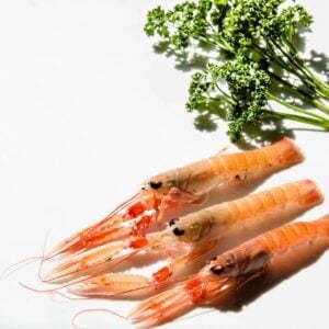 Vente directe de langoustines vivantes